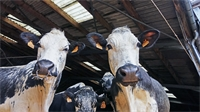 Salon de l'agriculture : à la rencontre de deux exploitations vosgiennes