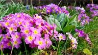 Que faire dans votre jardin en ce mois de mars ?