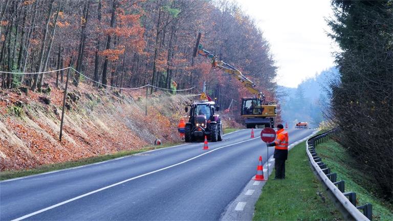 Vosges  : Vaste campagne d'élagage menée par le département