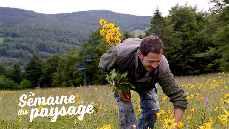La Com Com des Hautes Vosges veut mettre en lumière son environnement